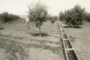 new meadows, apple orchards, history
