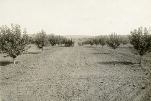 new meadows, apple orchards