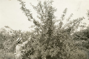new meadows, apple orchards, idaho, new meadows