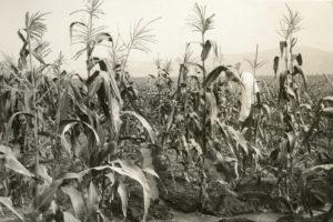 cornstock, new meadows, idaho, founders