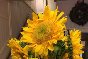 front desk, brochures, sunflowers